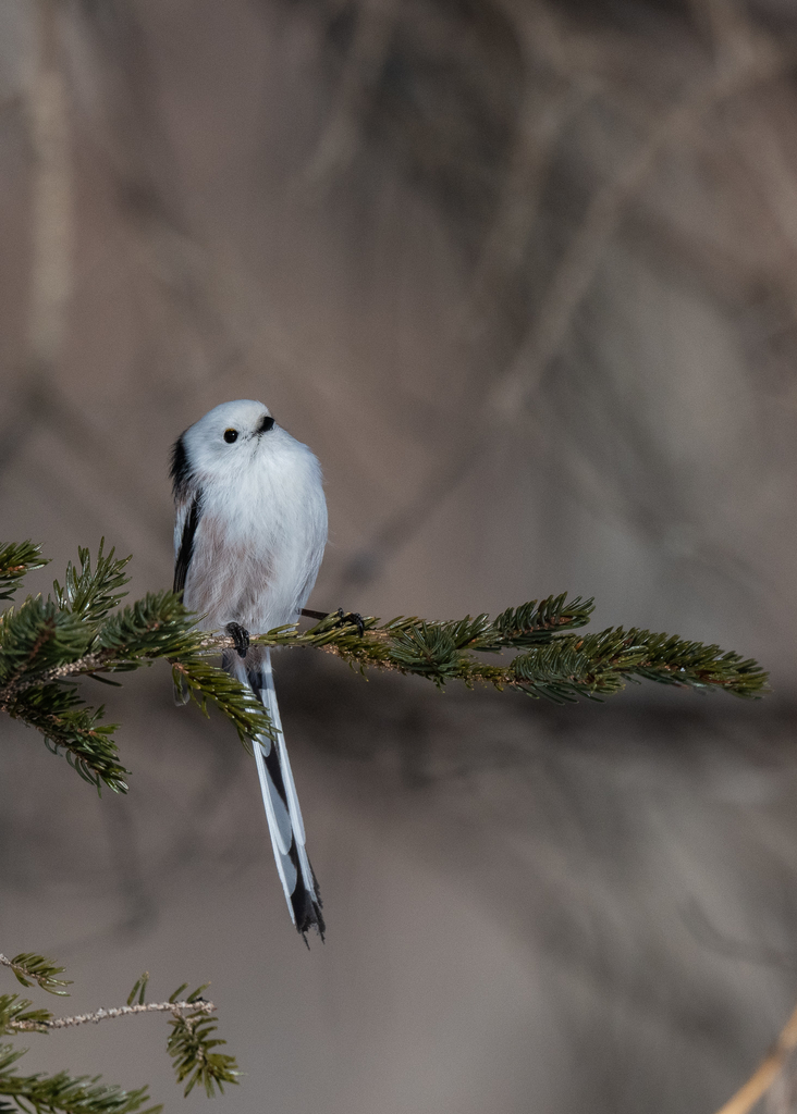 f:id:john_birdswatch:20190117193327j:plain