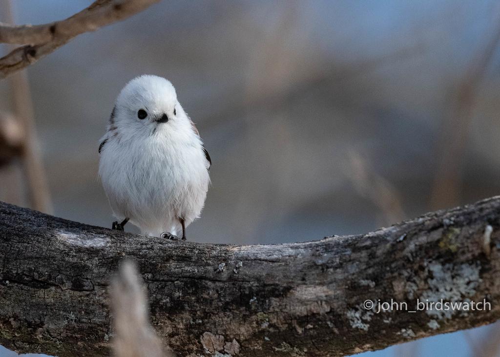 f:id:john_birdswatch:20190117194410j:plain