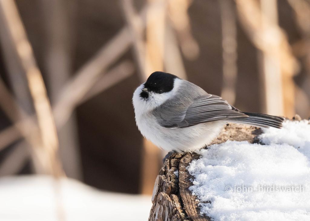 f:id:john_birdswatch:20190117214256j:plain
