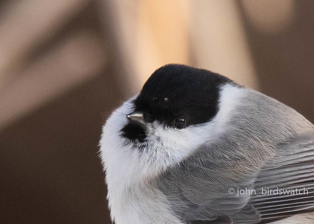 f:id:john_birdswatch:20190117214516j:plain