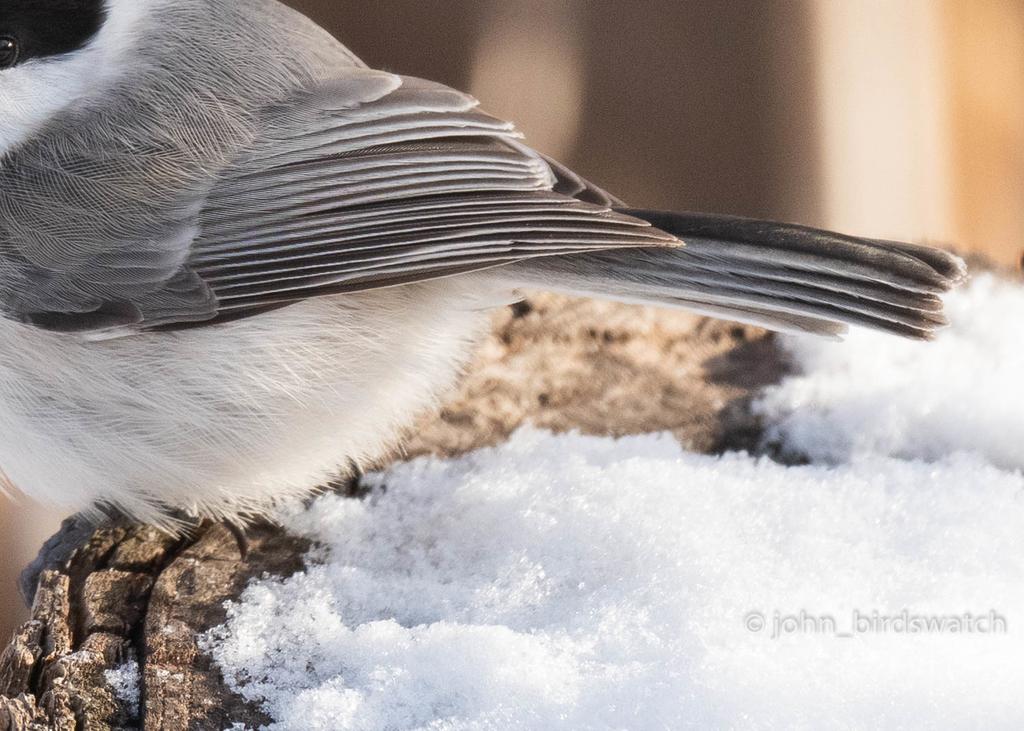 f:id:john_birdswatch:20190117214806j:plain