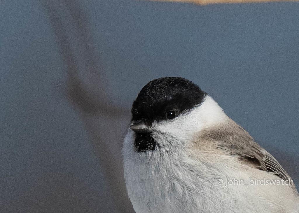 f:id:john_birdswatch:20190117220104j:plain