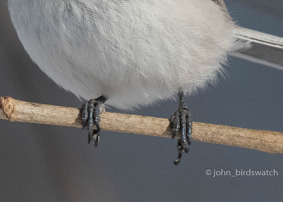 f:id:john_birdswatch:20190117220455j:plain