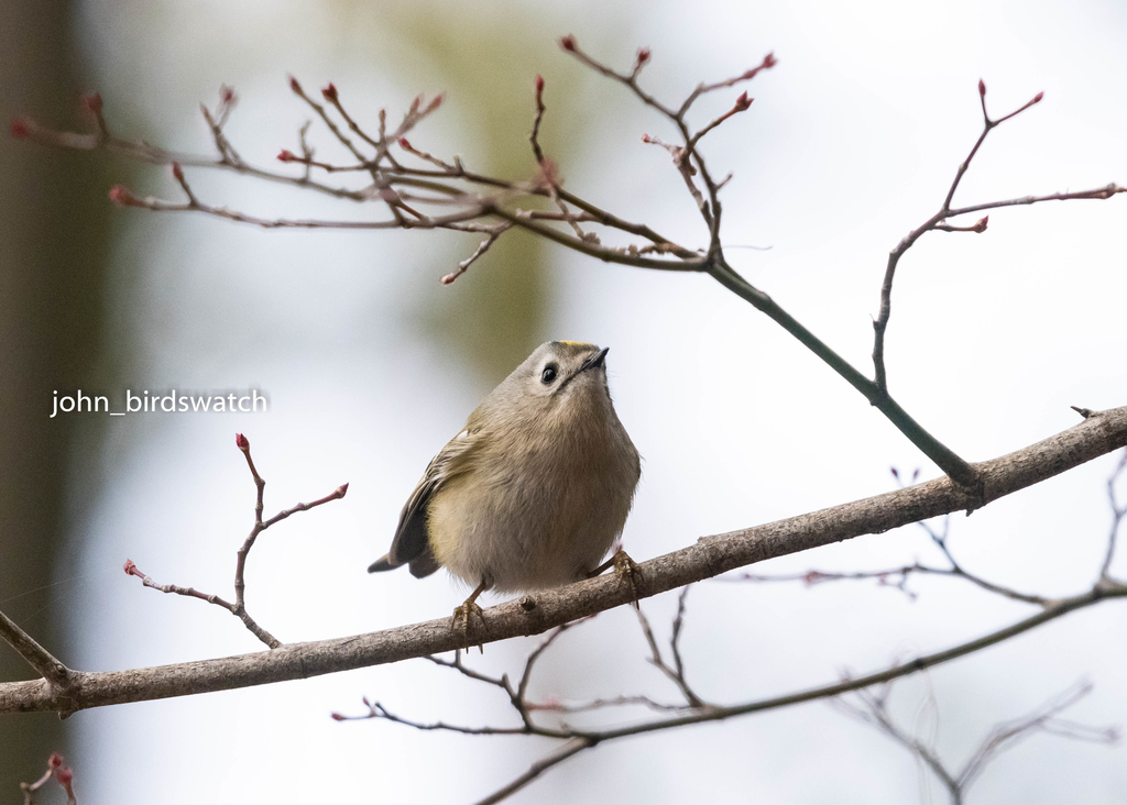f:id:john_birdswatch:20190121102701j:plain