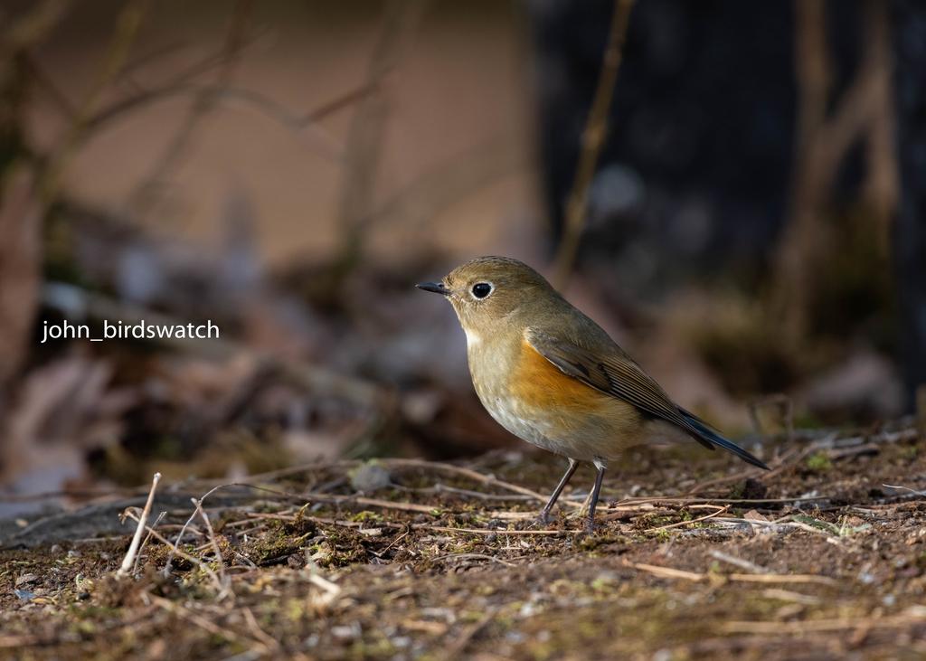 f:id:john_birdswatch:20190121154414j:plain