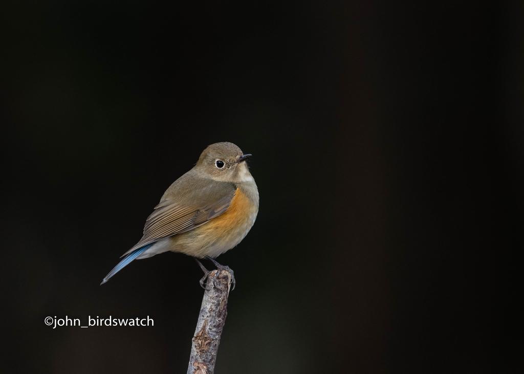 f:id:john_birdswatch:20190121160453j:plain
