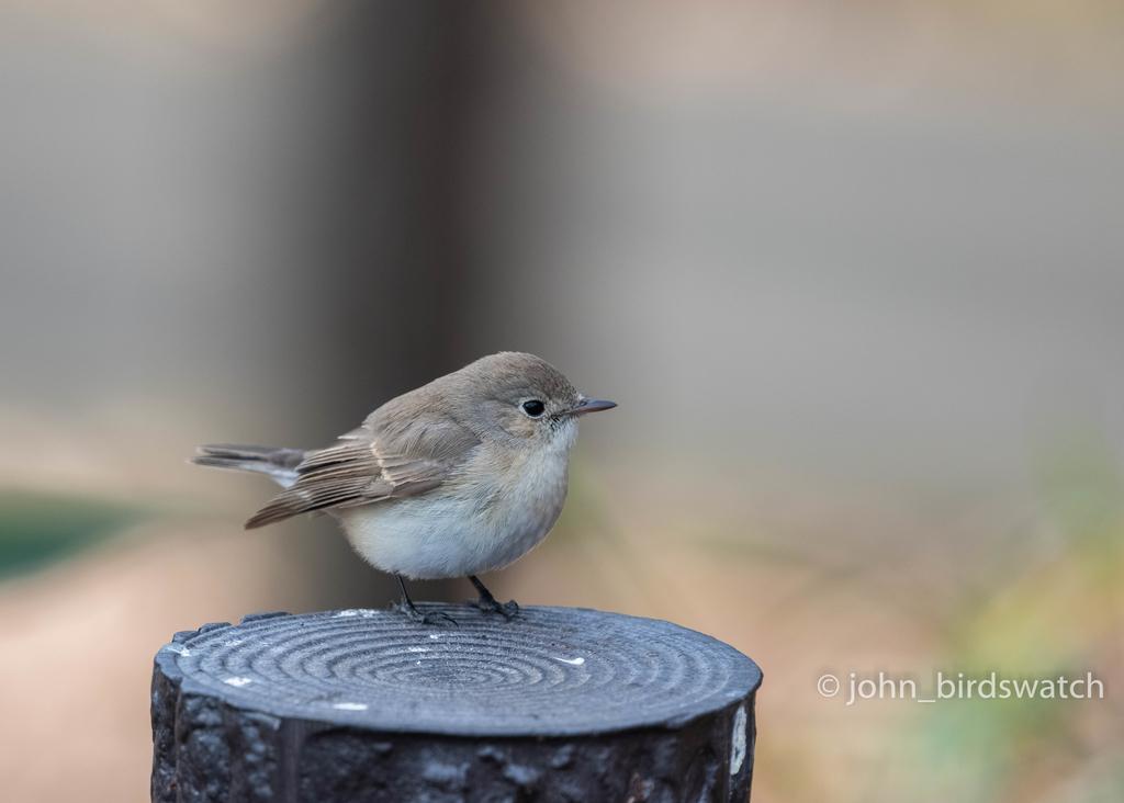 f:id:john_birdswatch:20190121161437j:plain
