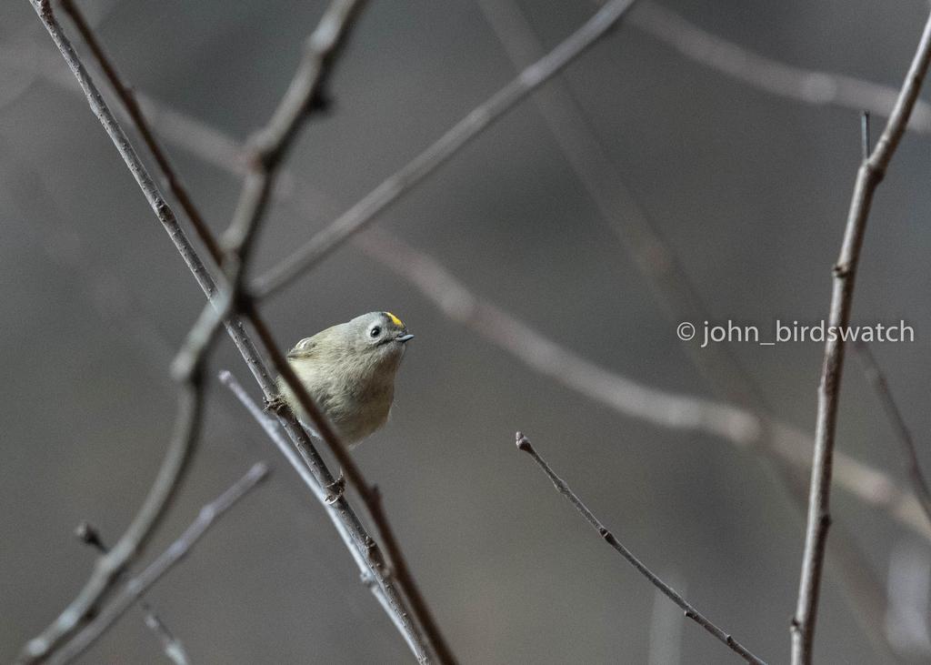 f:id:john_birdswatch:20190121191946j:plain