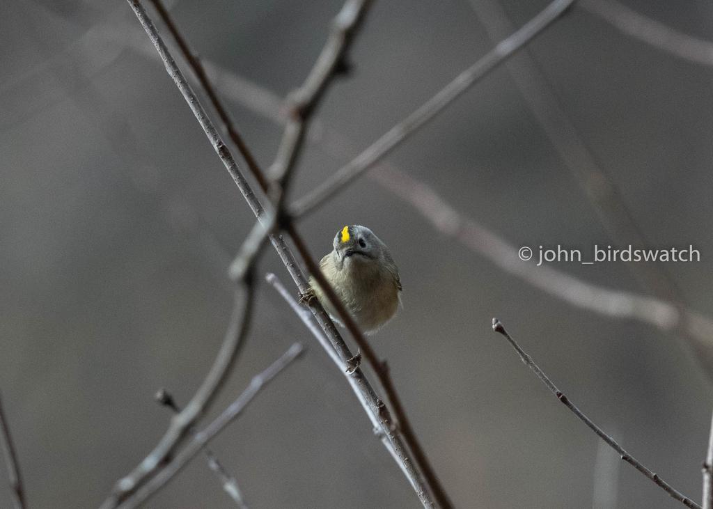 f:id:john_birdswatch:20190121192133j:plain