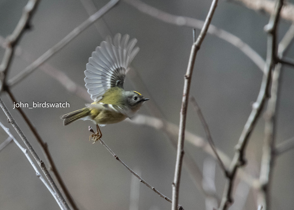 f:id:john_birdswatch:20190121192343j:plain