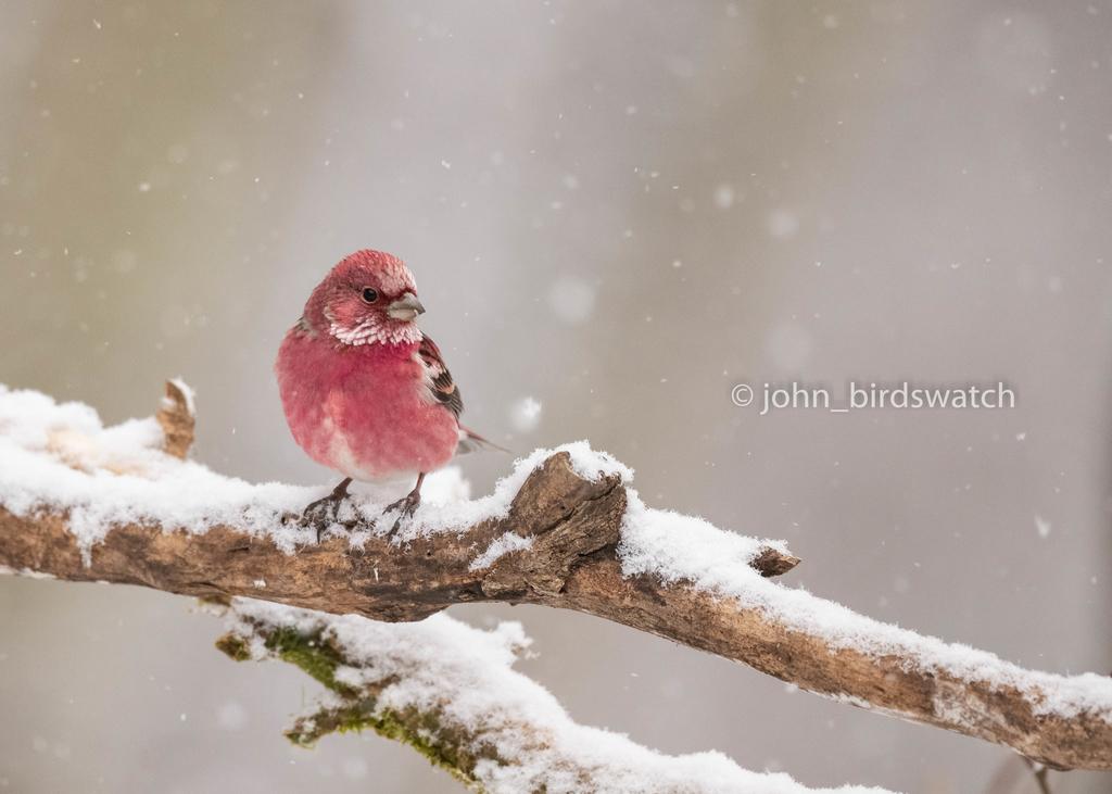 f:id:john_birdswatch:20190212200100j:plain