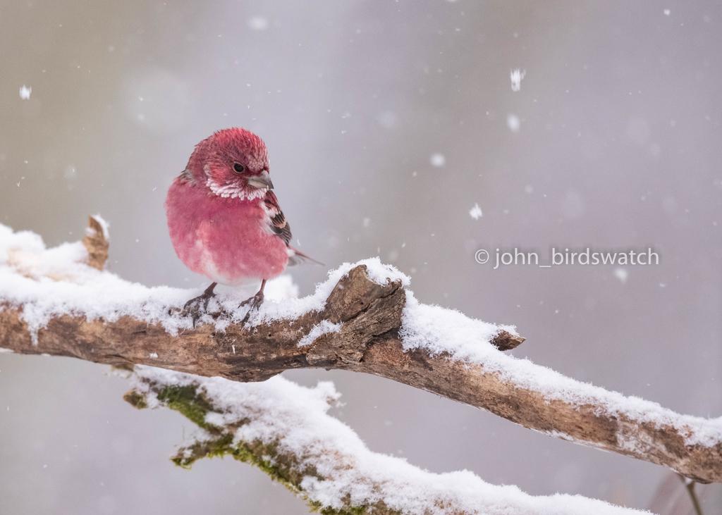 f:id:john_birdswatch:20190212200620j:plain