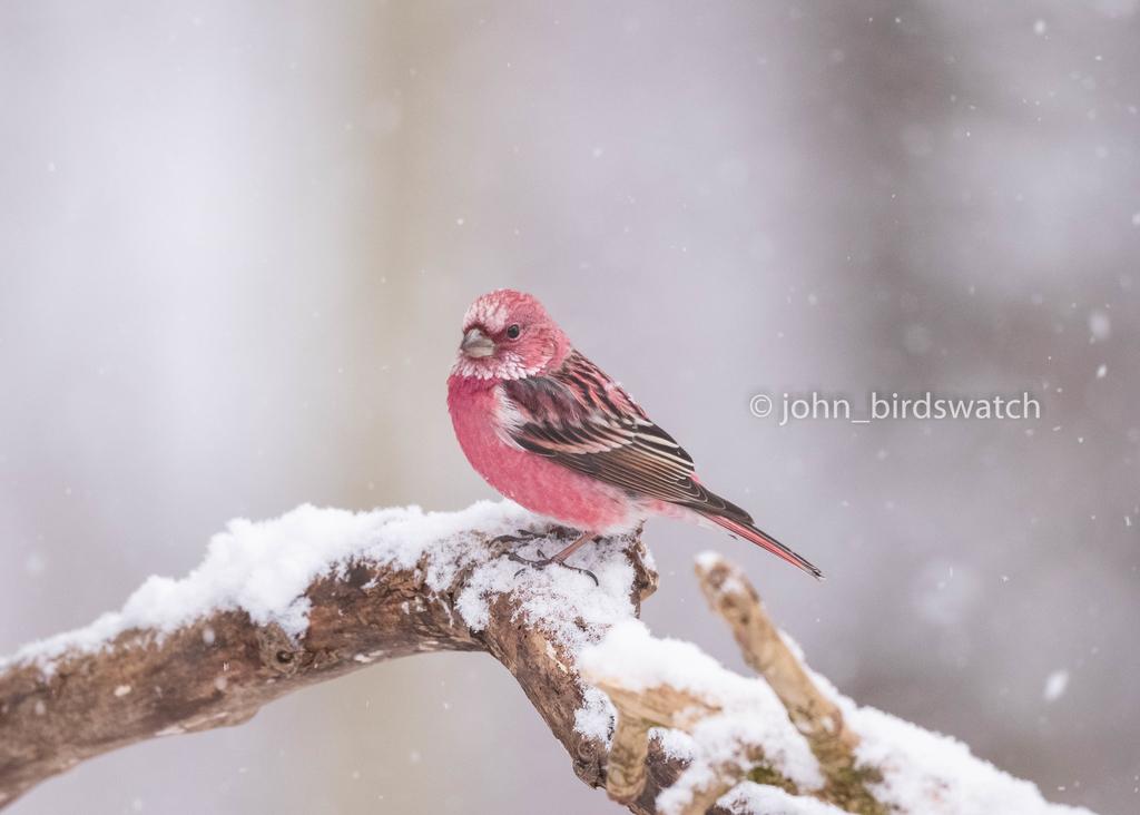 f:id:john_birdswatch:20190212201152j:plain
