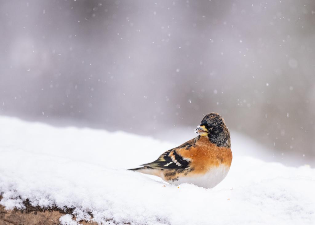 f:id:john_birdswatch:20190214201135j:plain