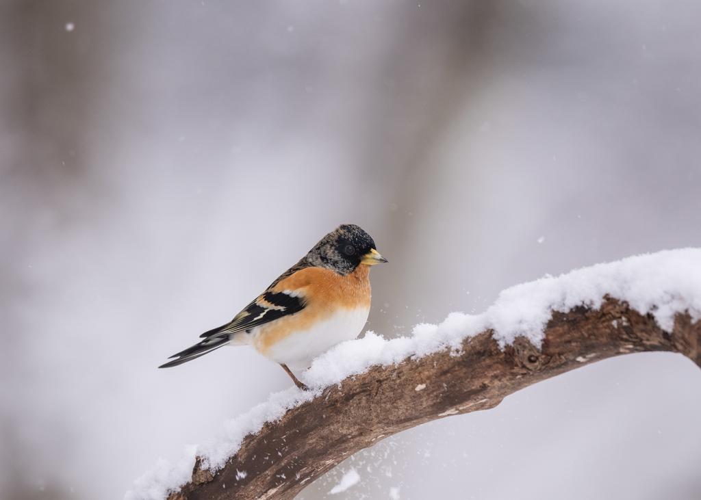 f:id:john_birdswatch:20190214201927j:plain