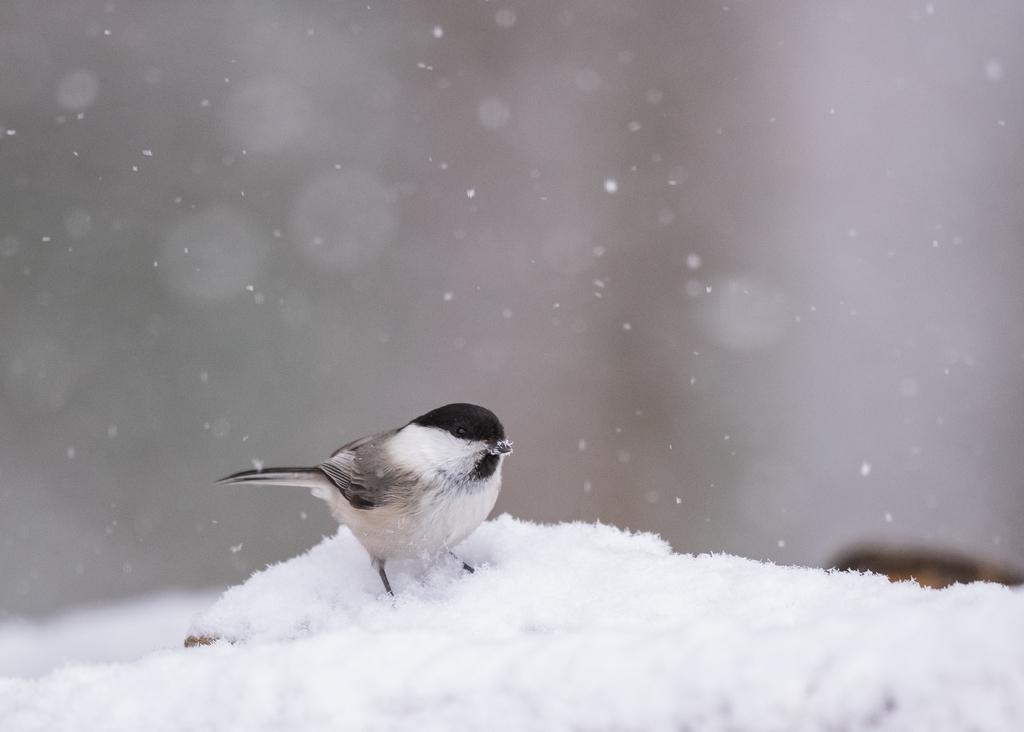 f:id:john_birdswatch:20190214202727j:plain