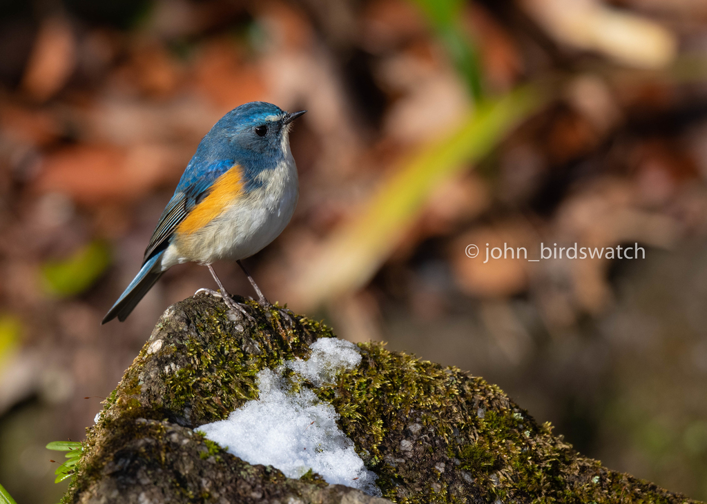 f:id:john_birdswatch:20190218201158j:plain
