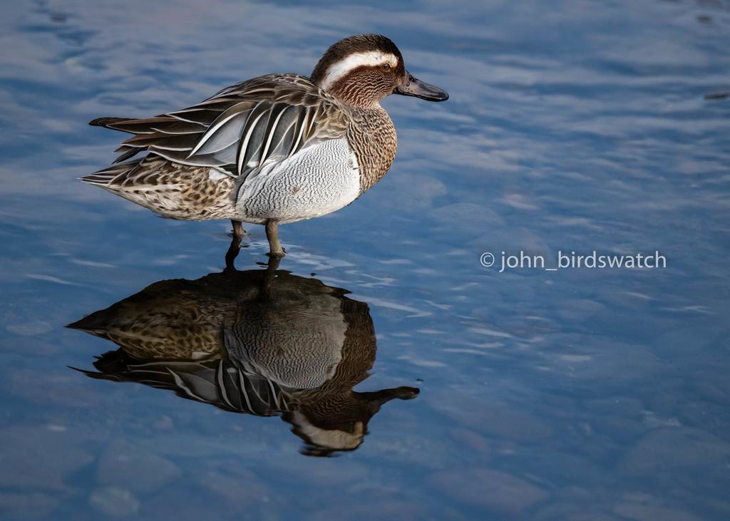 f:id:john_birdswatch:20190224191646j:plain