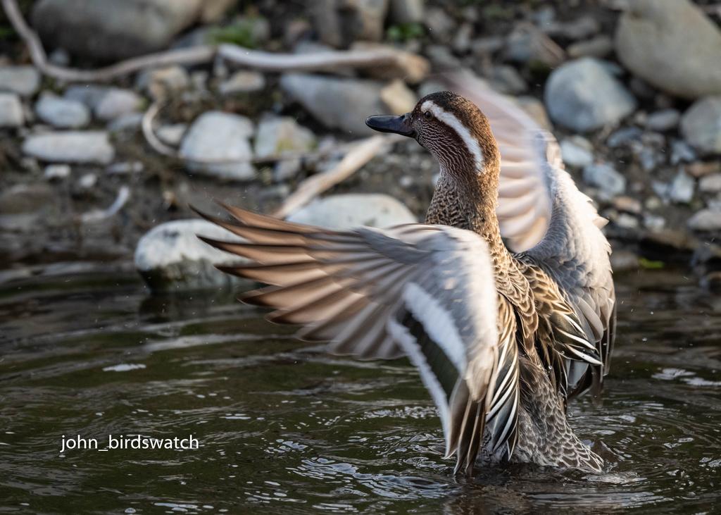 f:id:john_birdswatch:20190224192916j:plain