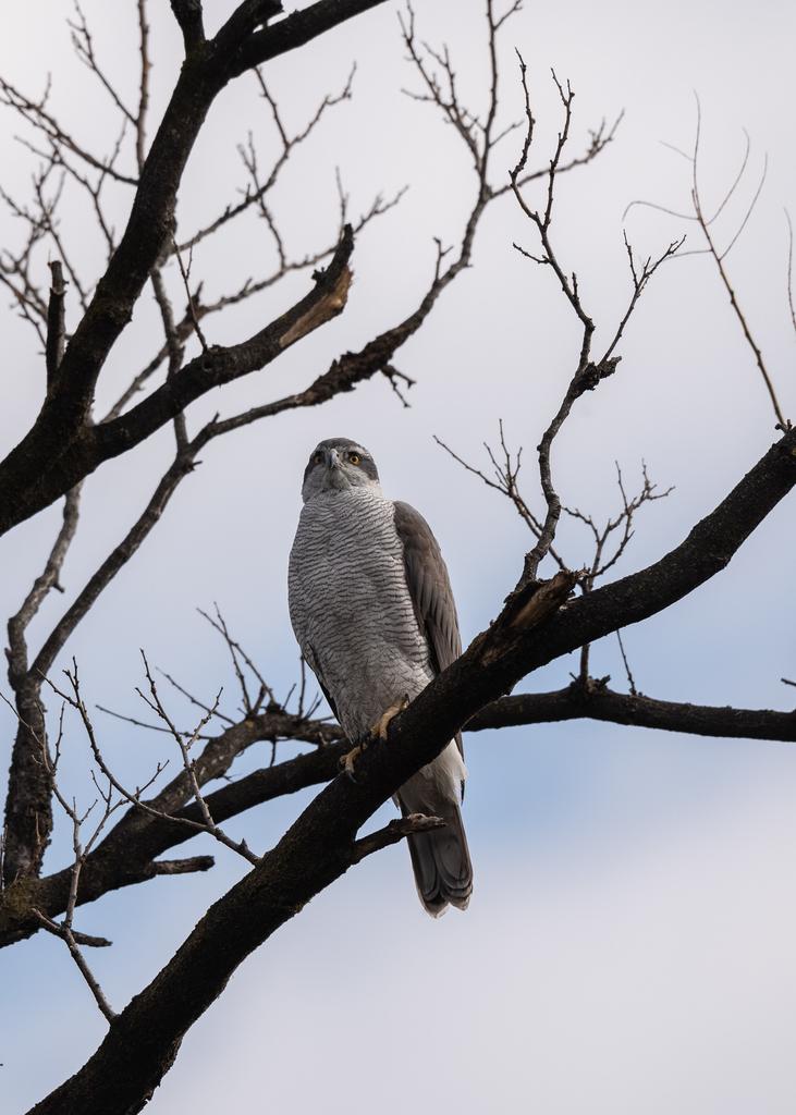 f:id:john_birdswatch:20190227194804j:plain