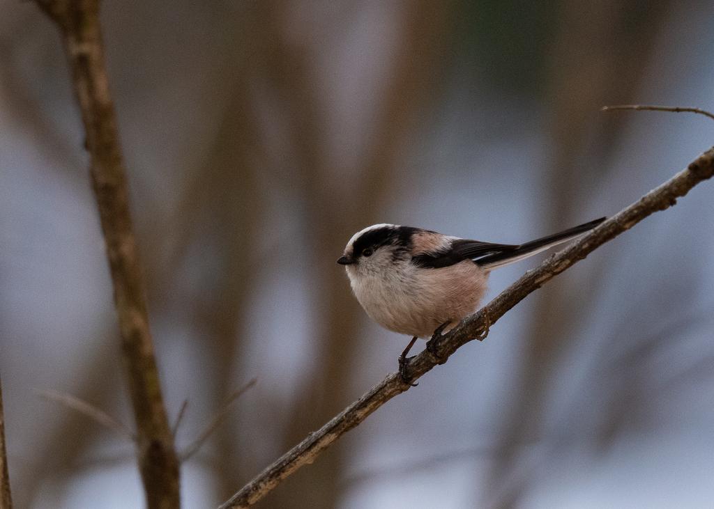 f:id:john_birdswatch:20190305205600j:plain