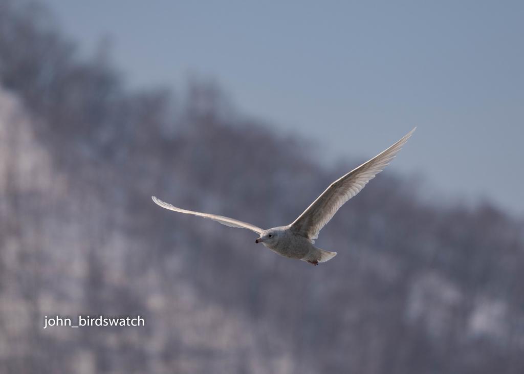 f:id:john_birdswatch:20190307223605j:plain