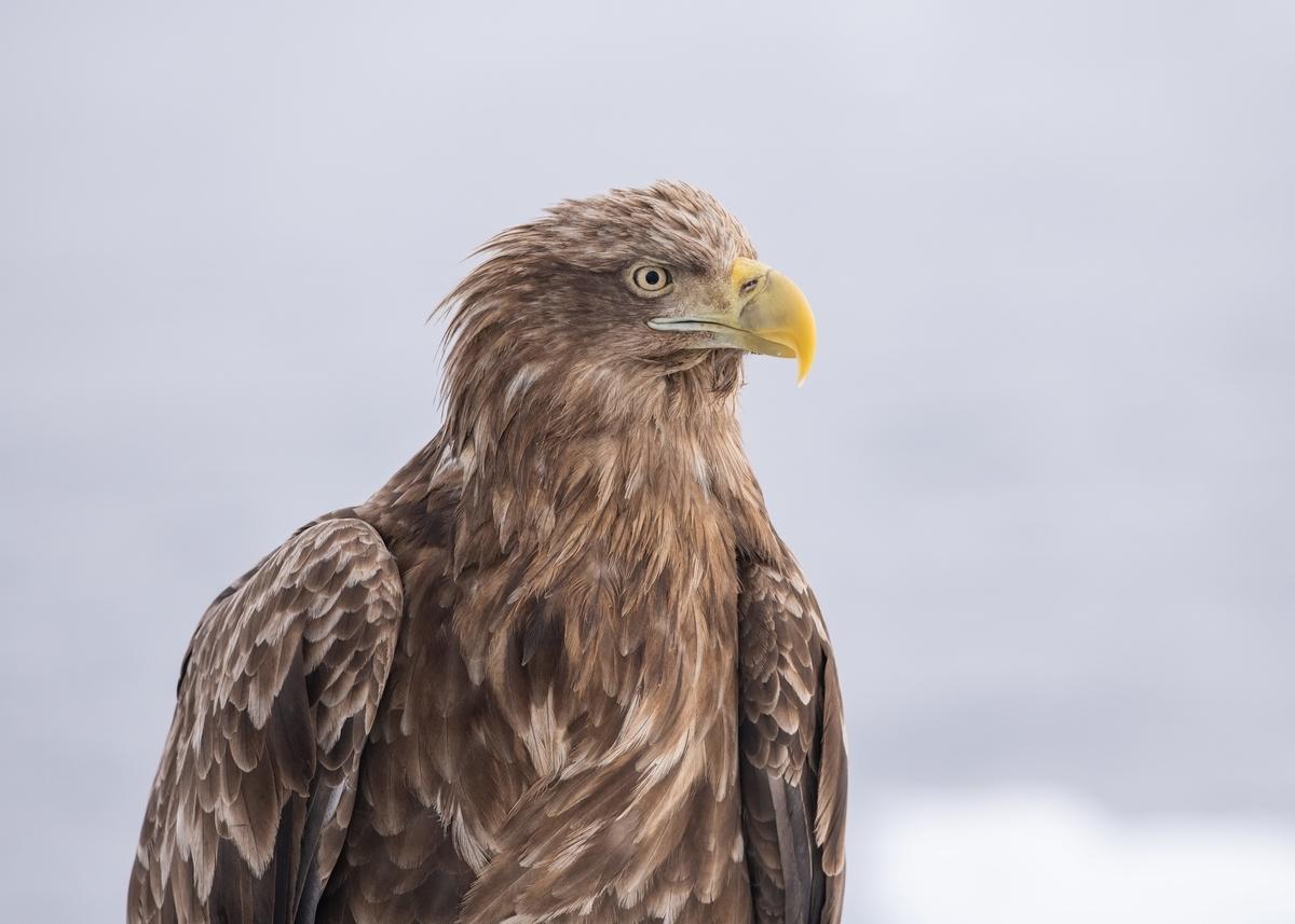 f:id:john_birdswatch:20190318221941j:plain