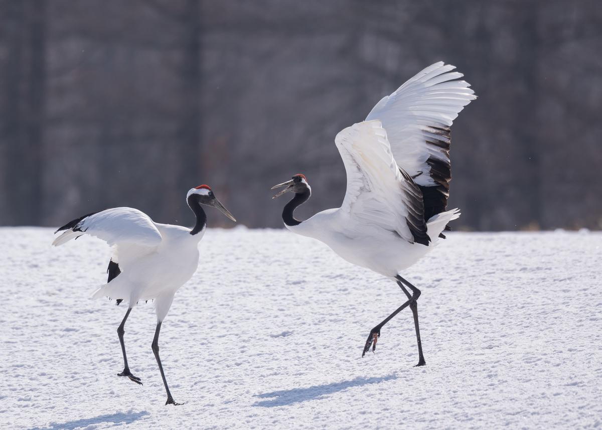 f:id:john_birdswatch:20190323213437j:plain