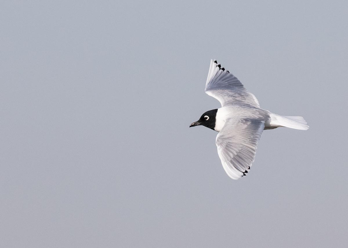 f:id:john_birdswatch:20190329170741j:plain