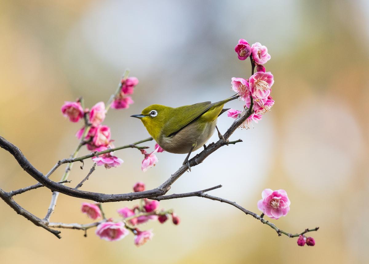 f:id:john_birdswatch:20190331222931j:plain