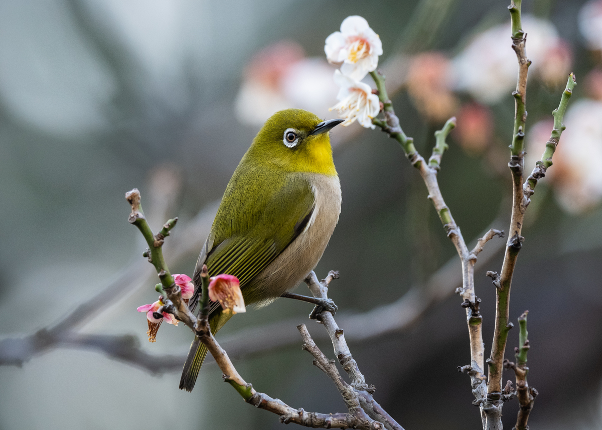 f:id:john_birdswatch:20190331223840j:plain