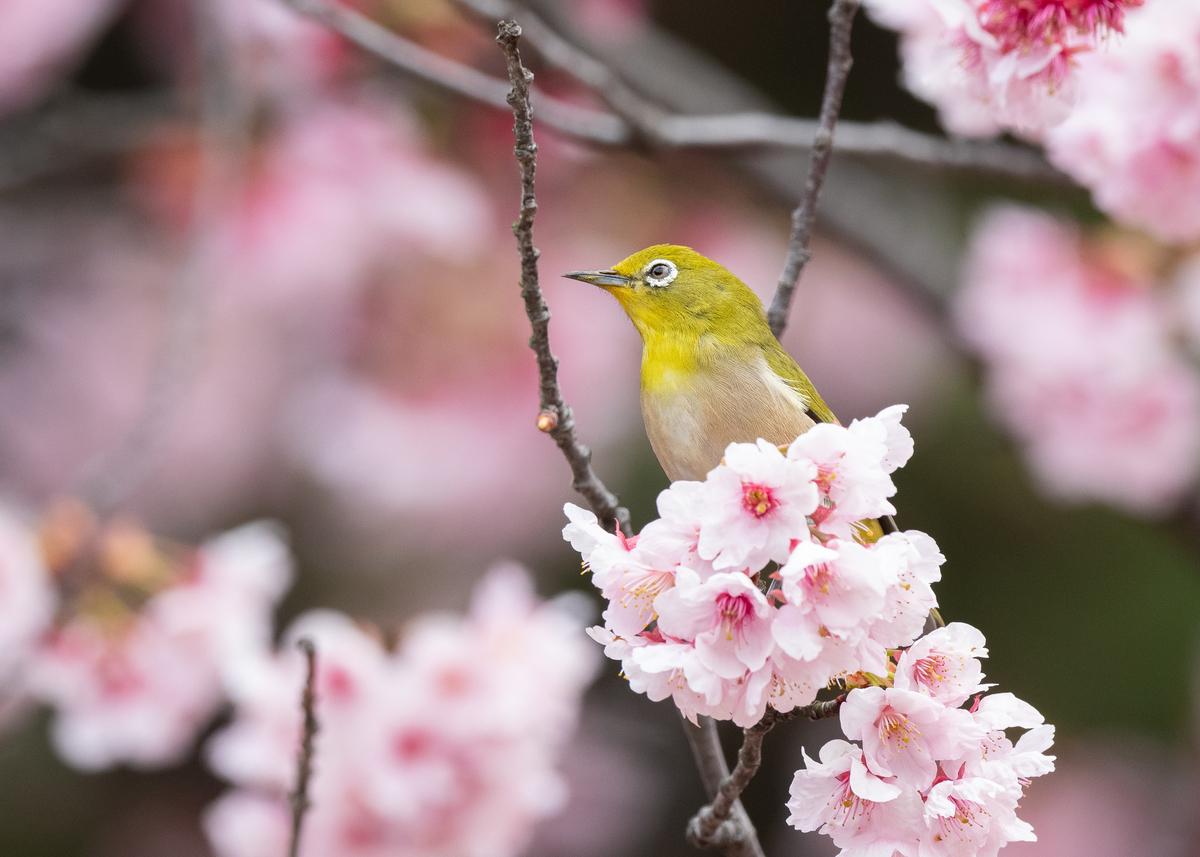 f:id:john_birdswatch:20190331230342j:plain