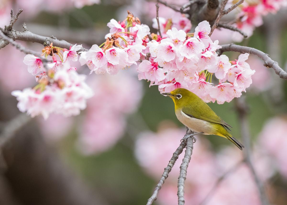 f:id:john_birdswatch:20190331230459j:plain