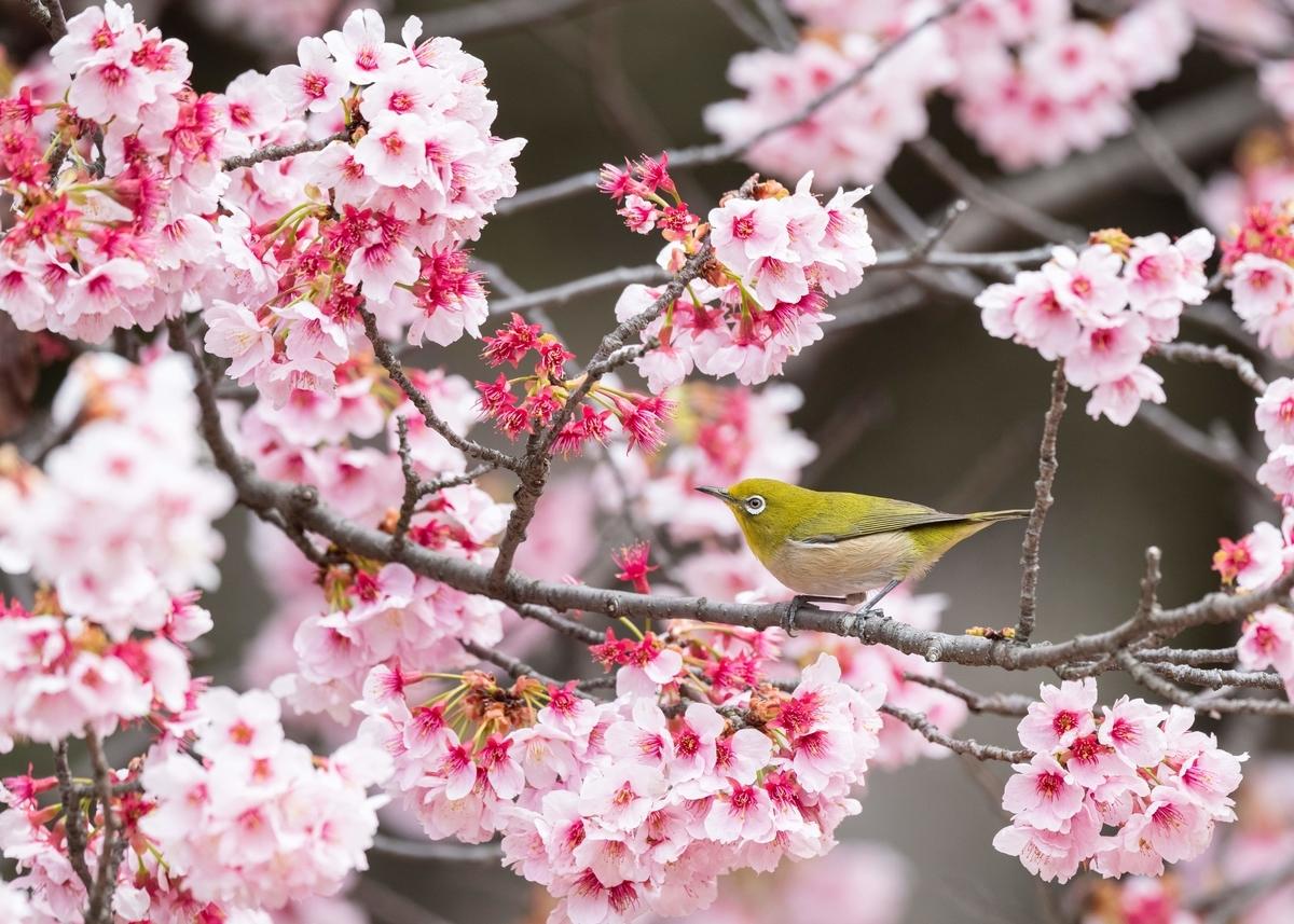 f:id:john_birdswatch:20190331230554j:plain
