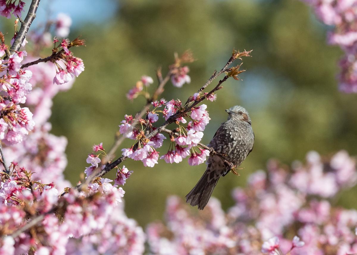 f:id:john_birdswatch:20190414210217j:plain