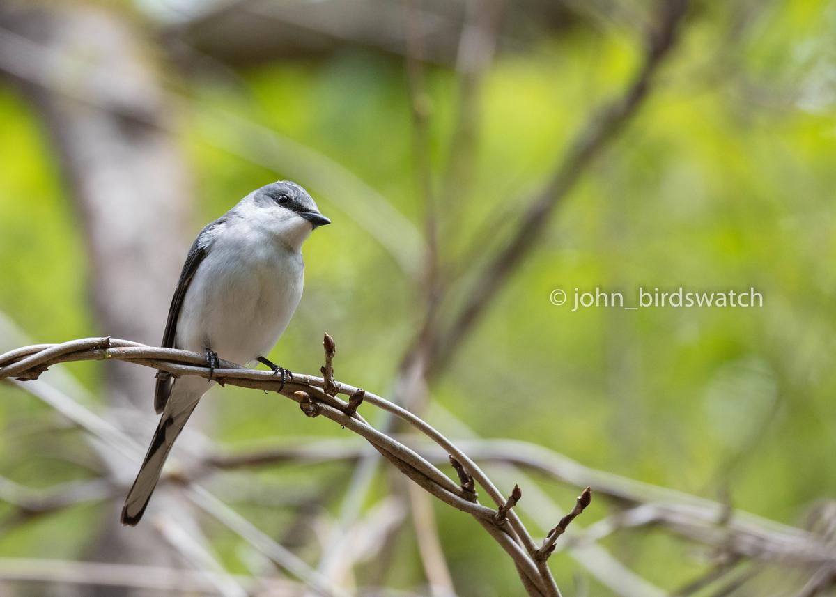f:id:john_birdswatch:20190526071429j:plain
