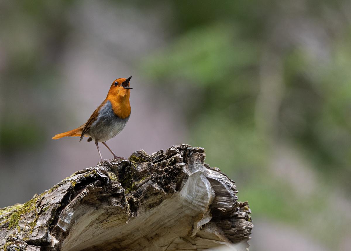 f:id:john_birdswatch:20190623160911j:plain