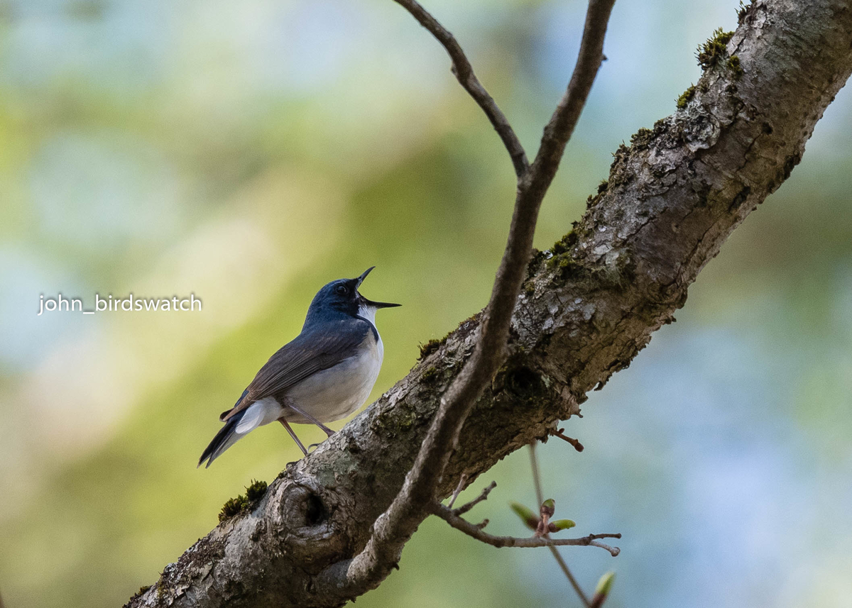 f:id:john_birdswatch:20190716213730j:plain