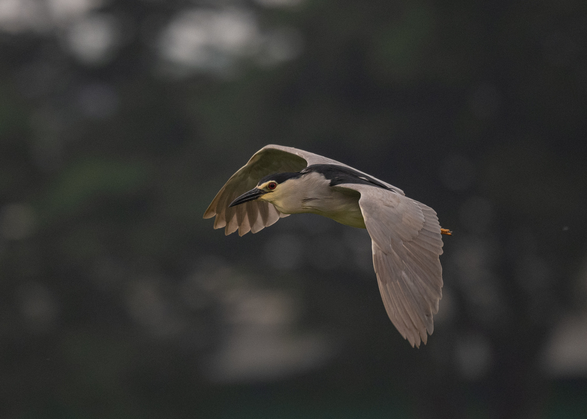 f:id:john_birdswatch:20190729220951j:plain
