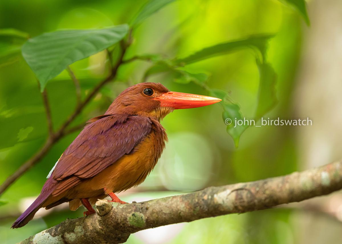 f:id:john_birdswatch:20190824212853j:plain