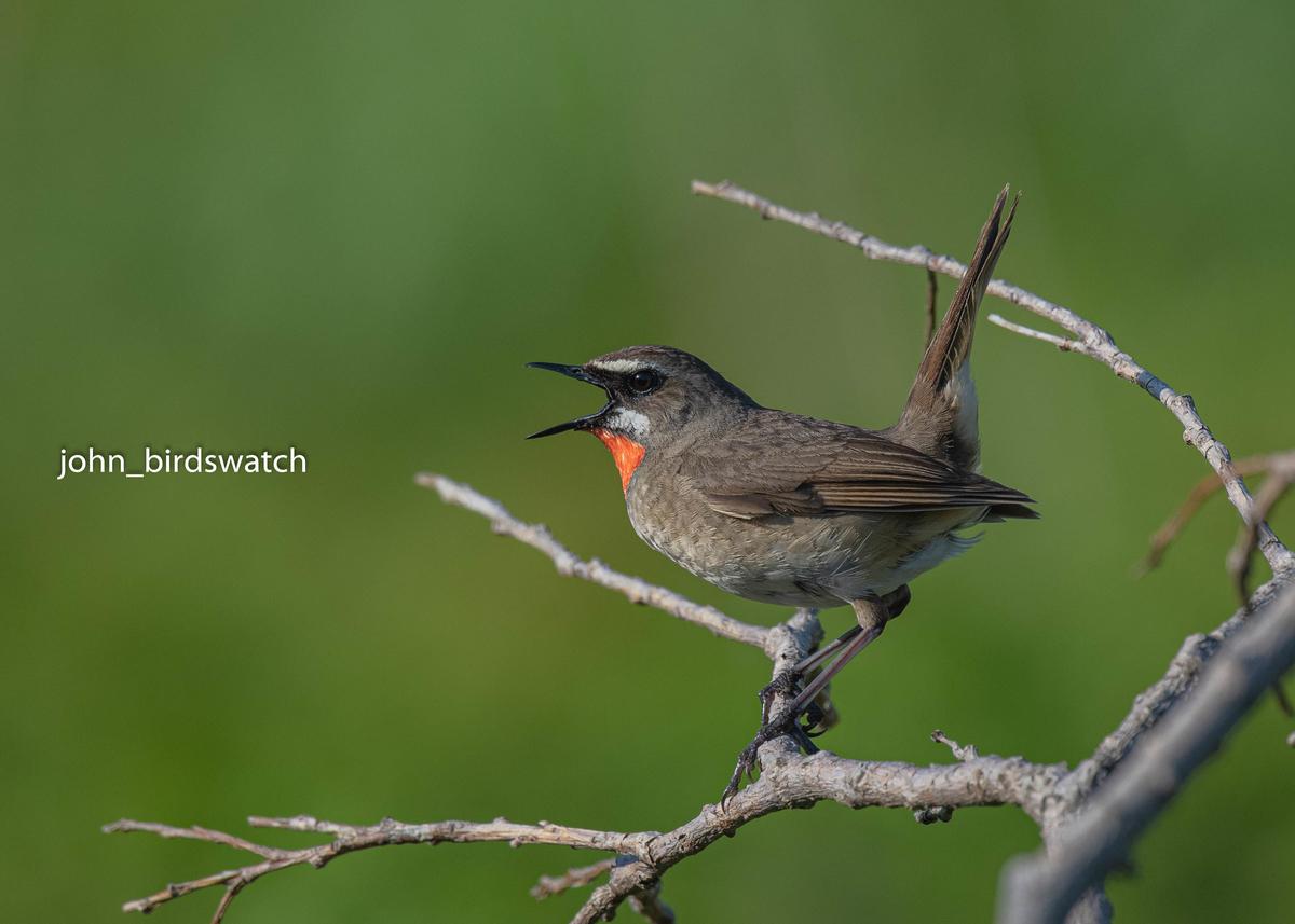 f:id:john_birdswatch:20190902212044j:plain