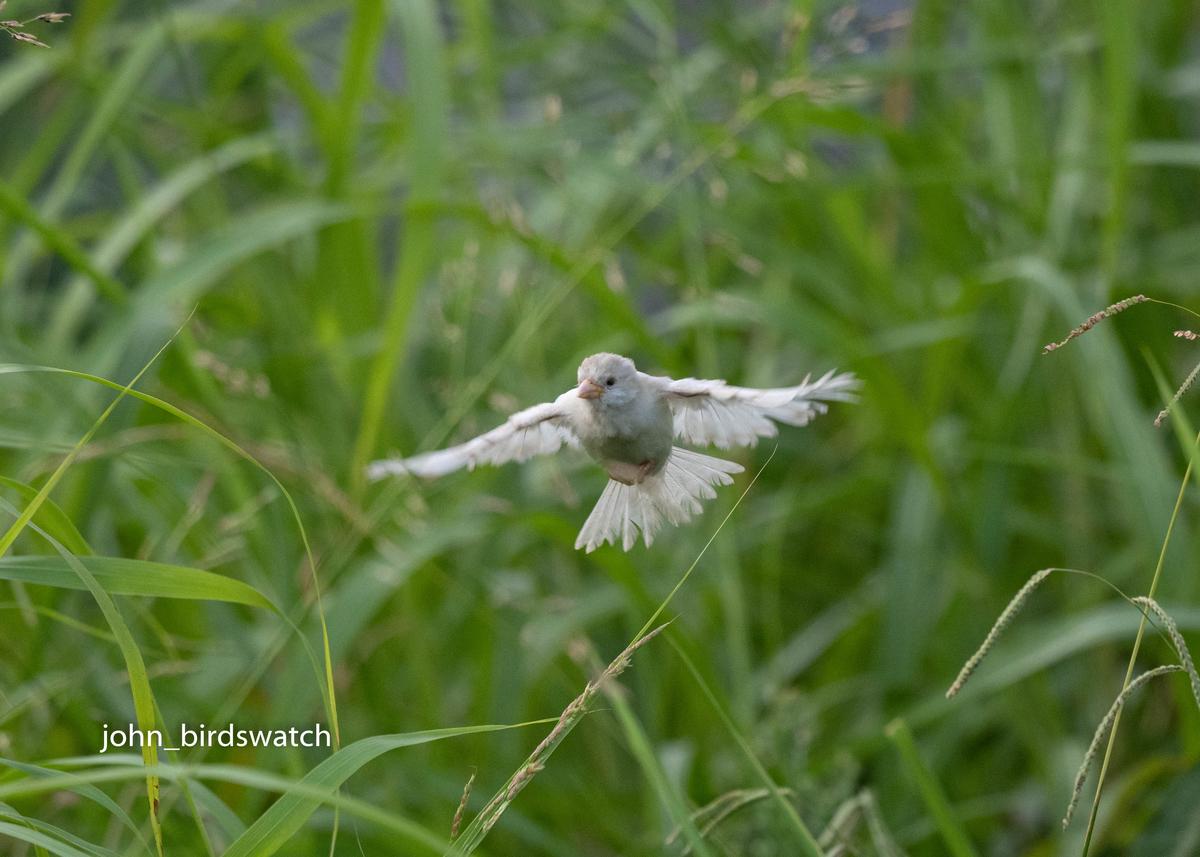 f:id:john_birdswatch:20191106215639j:plain