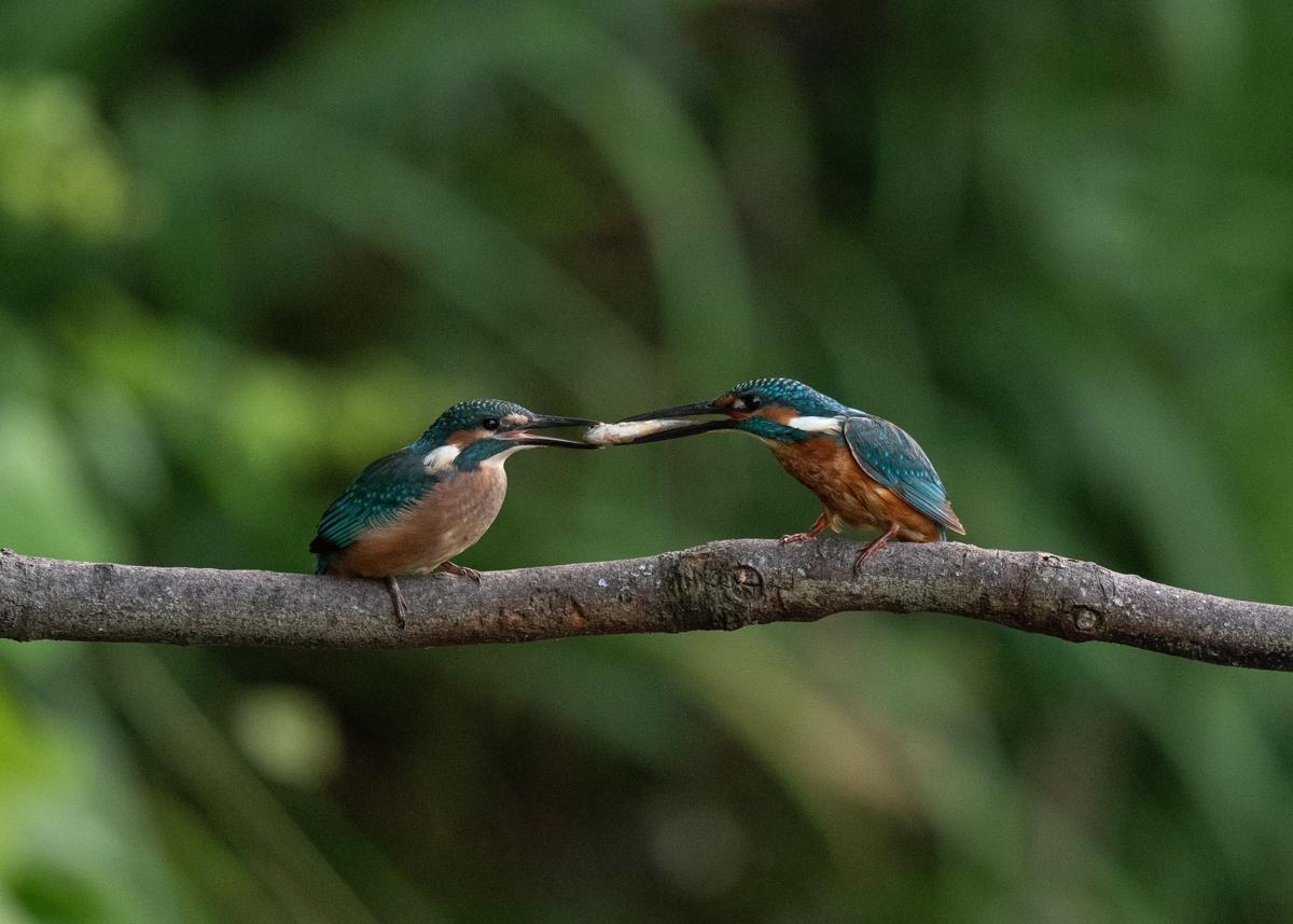 f:id:john_birdswatch:20191219214446j:plain