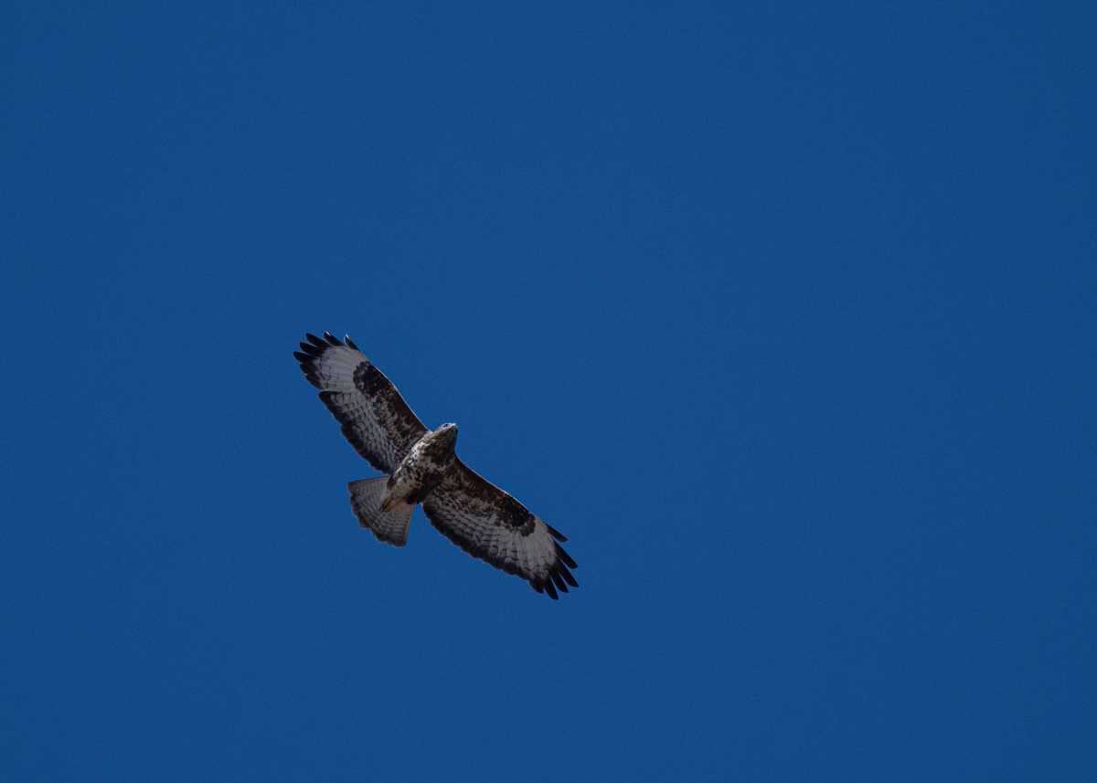f:id:john_birdswatch:20191231171406j:plain