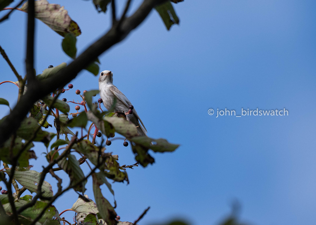 f:id:john_birdswatch:20200102214431j:plain