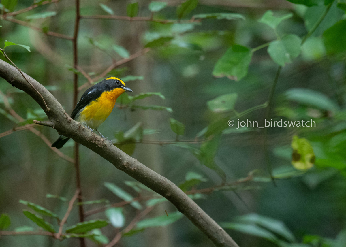 f:id:john_birdswatch:20200102214438j:plain