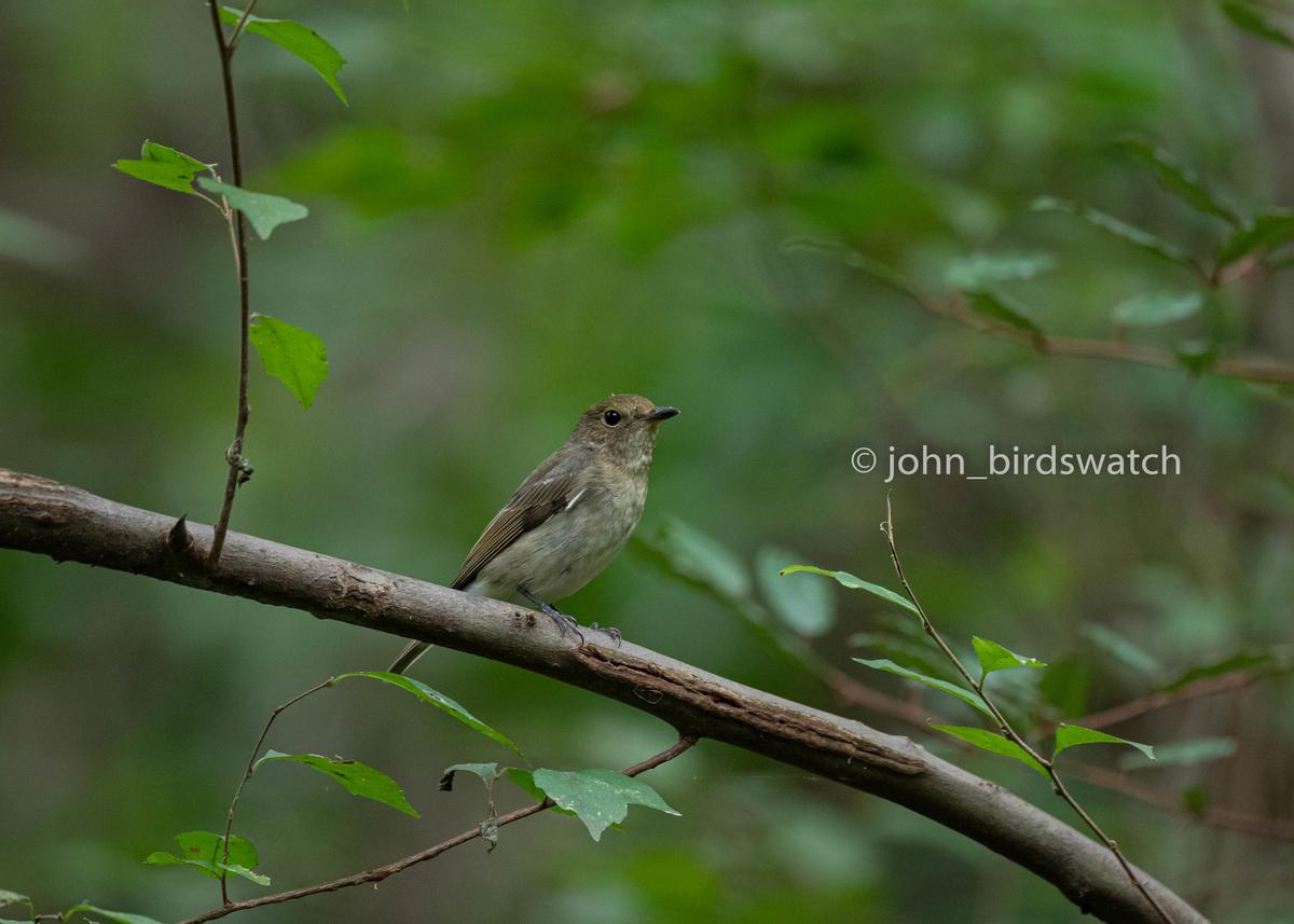 f:id:john_birdswatch:20200102214443j:plain