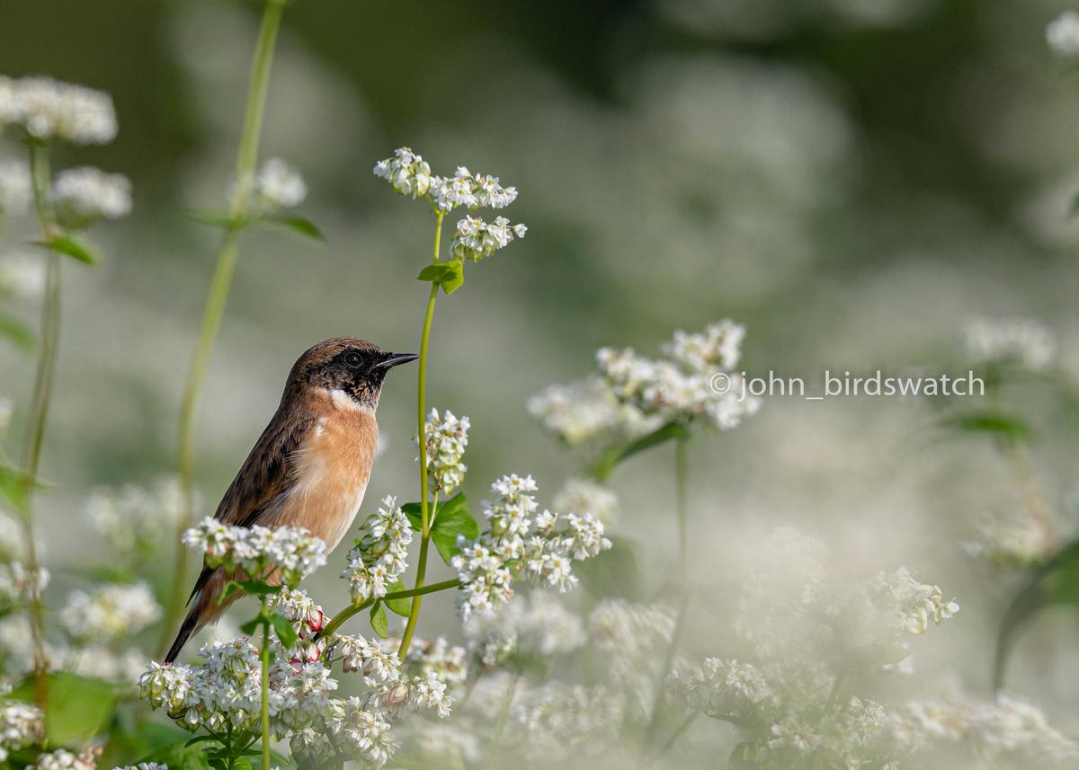 f:id:john_birdswatch:20200107225121j:plain