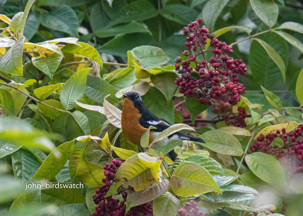 f:id:john_birdswatch:20200128213712j:plain
