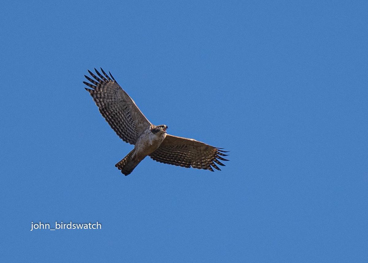 f:id:john_birdswatch:20200204210217j:plain